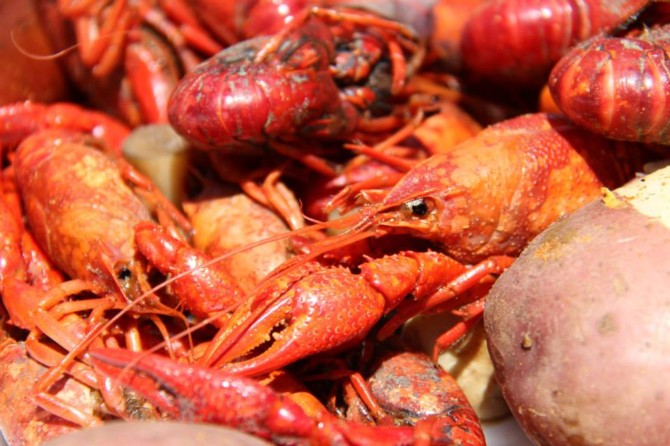 crawfish boil 2015